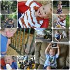 week 31 - 52 collages - thekarpiuks